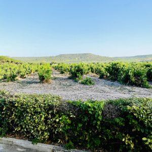 Un día en la Ribera del Duero, ¿qué hacer y dónde comer?