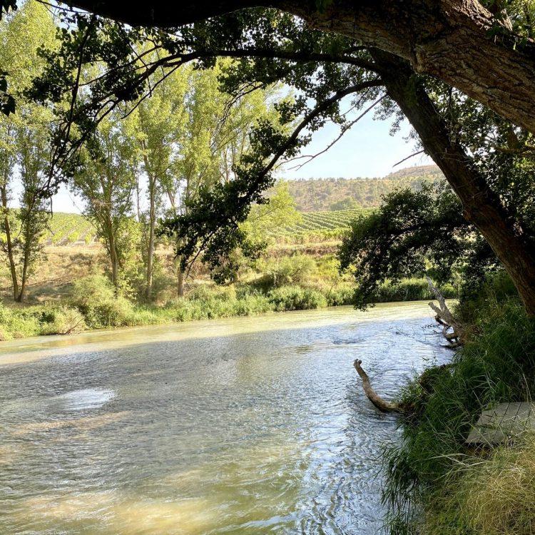 Un día en la Ribera del Duero
