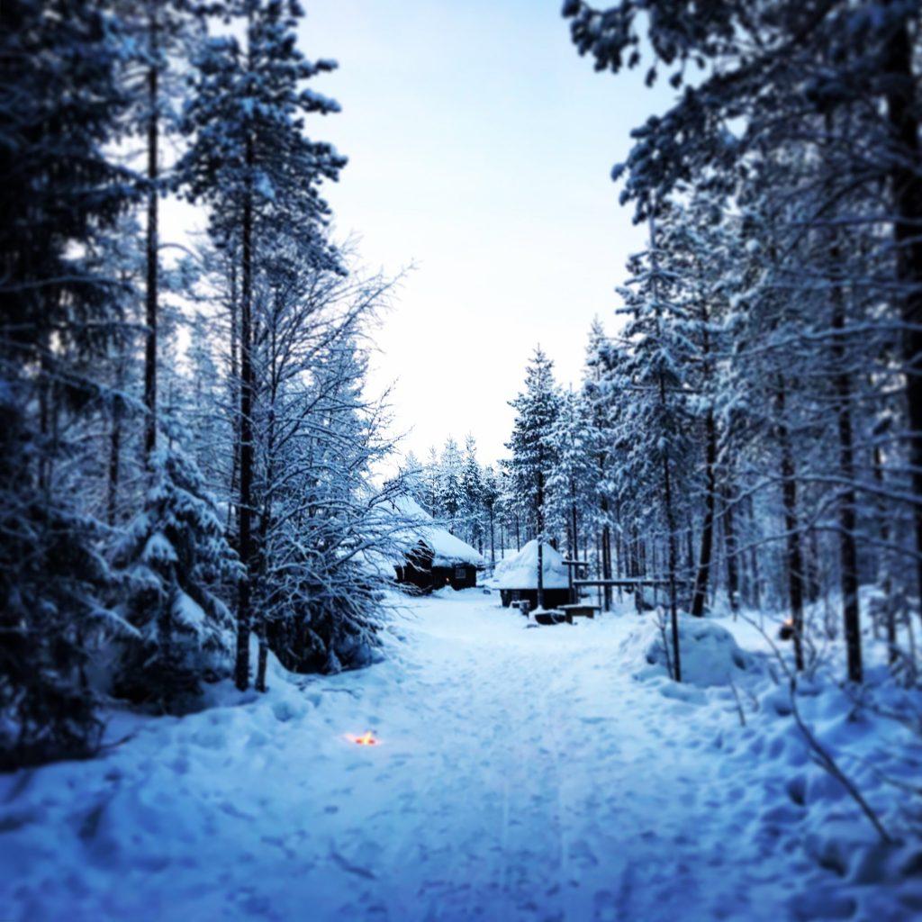 Bosque secreto de Joulukka Papá Noel en Laponia
