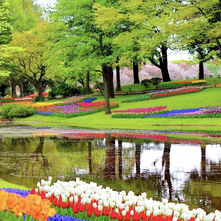 Keukenhof que visitar en Holanda