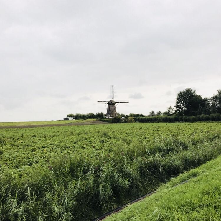 Corazón verde Holanda cosas que hacer en Holanda